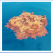 Île aride