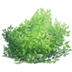 Consumable bush.png