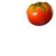 TomatoToy.png