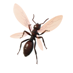Ant-Tonio.png