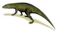 Protosuchus BW.jpg