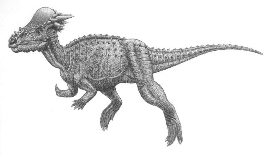 Pachycephalosauria jmallon.jpg