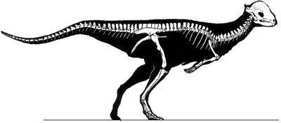 Stegoceras skeleton.jpg