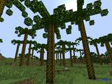 Palaeoraphe Tree