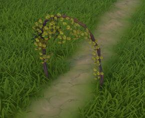 Plant Arch.jpg