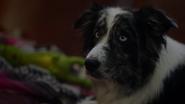 TG-Caps-1x01-eXposed-89-dog