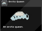 Arctic Queen