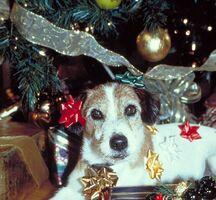 Christmaseddie