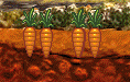 Carrote5.png