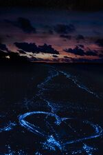 Сверкающие волны 4
