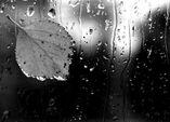Чёрный дождь 5