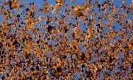 Миграция бабочек 4