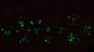 Transparent wave blacklight