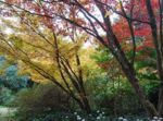 Autumn foliage in May