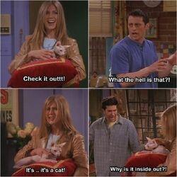 Friends funny-Rachel showing Ross & Joey her cat.jpg
