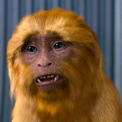 Macaco dourado.png
