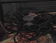 Rat de décharge