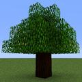 Tree Pear (Calculator).png