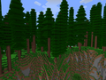 Redwood Forest.png