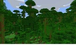 Bamboo Forest (biome).jpg
