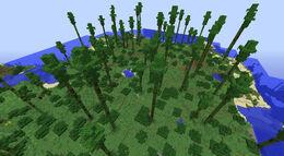 BiomesOPlenty Eucalyptus Forest 1.jpg