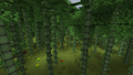 Bamboo Forest BoP.png