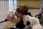 Max Fuller with puppies 001