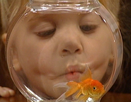 A fish called martin