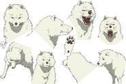 Joaan Anime Character Design