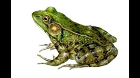 Frog Sound effect