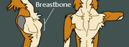 Sergal Breastbone