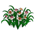 White Daffodil Flower Bed.png