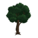 Decoration Weeping Willow Trees 2.png