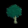 Plane Tree.png