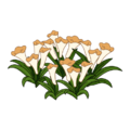 Peach Flower Bed.png