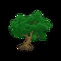 Beech Tree.png