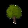 Hornbeam Tree.png