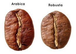 Robusta i arabika.jpg