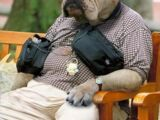 Canis sapiens (Canine evolution)