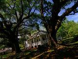 Magnolia Plantation (episode)