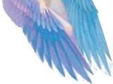 Freya's Falcon Coat