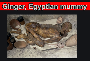 Ginger, Egyptian mummy.png