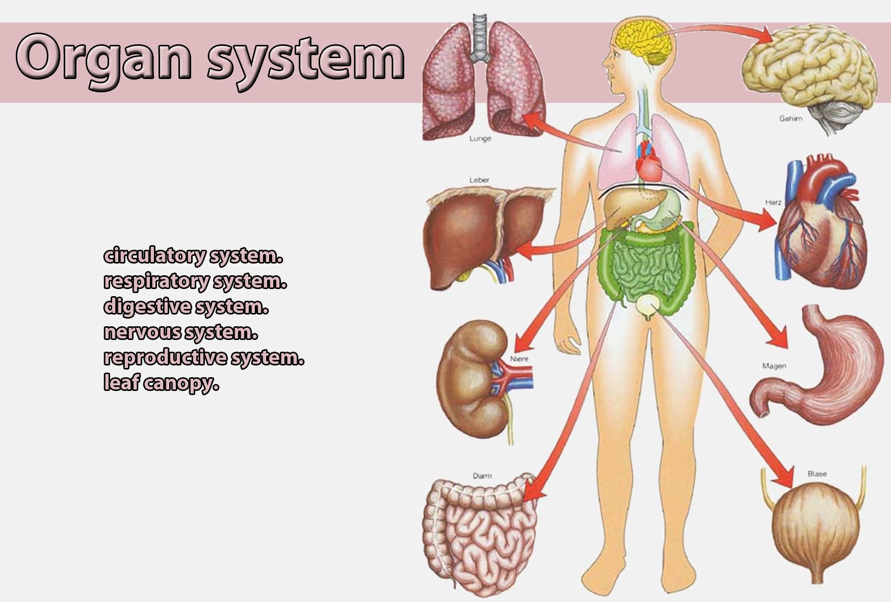 Organ system   Galnet Wiki   Fandom