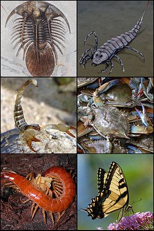 Arthropod