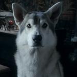 Nymeria (loup géant)