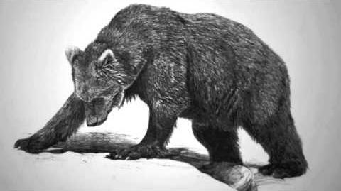 The Bear and the Maiden Fair