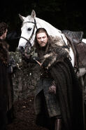 Ned & his horse