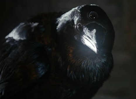 三つ目の鴉