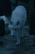 Fantasma (lobo gigante)