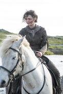 410 Arya Pferd